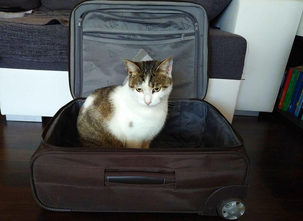 Utazás előtt sokaknak okoz fejtörést a poggyászok sorsa 358f53a230