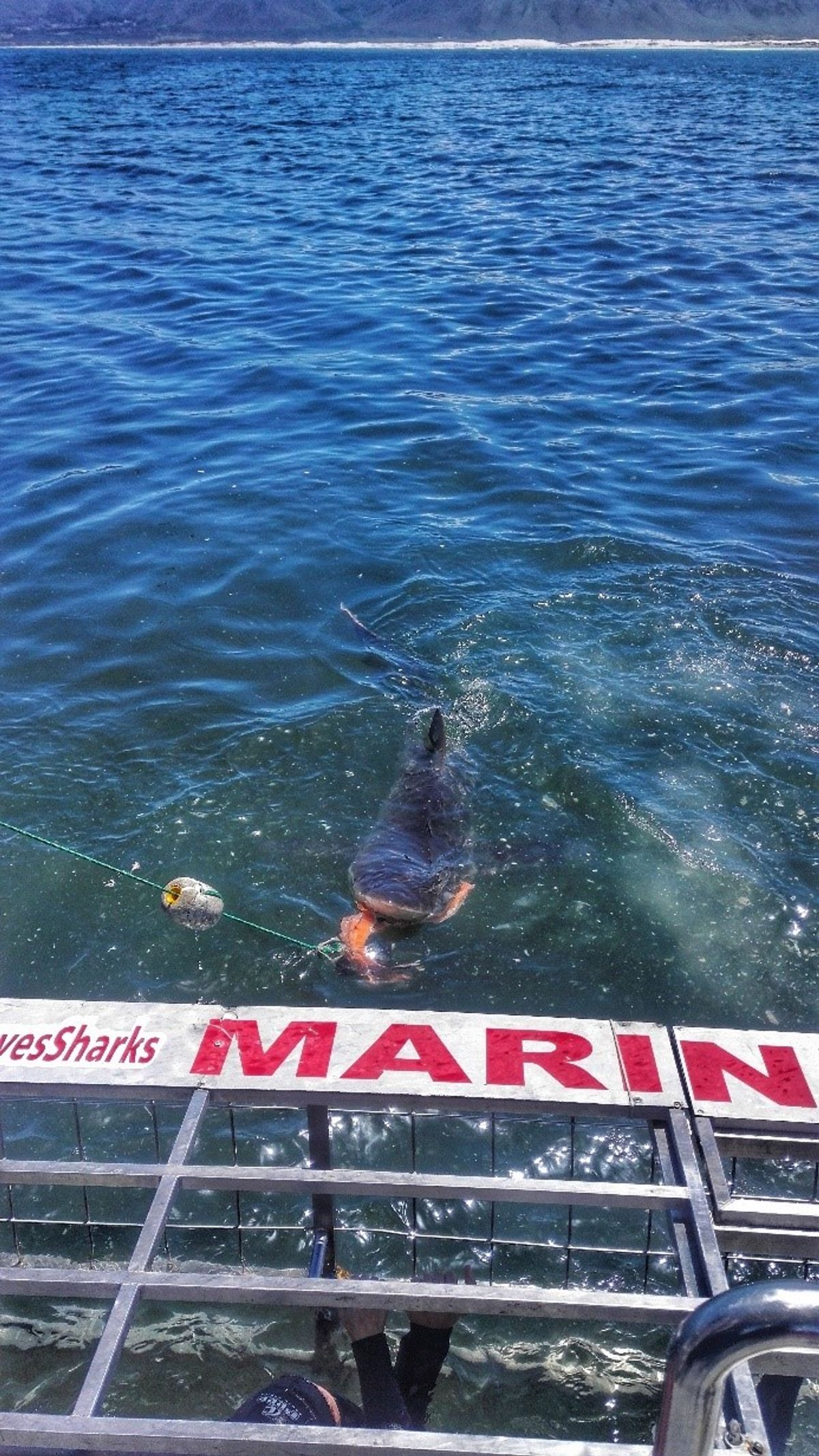 Ketrec és a cápa