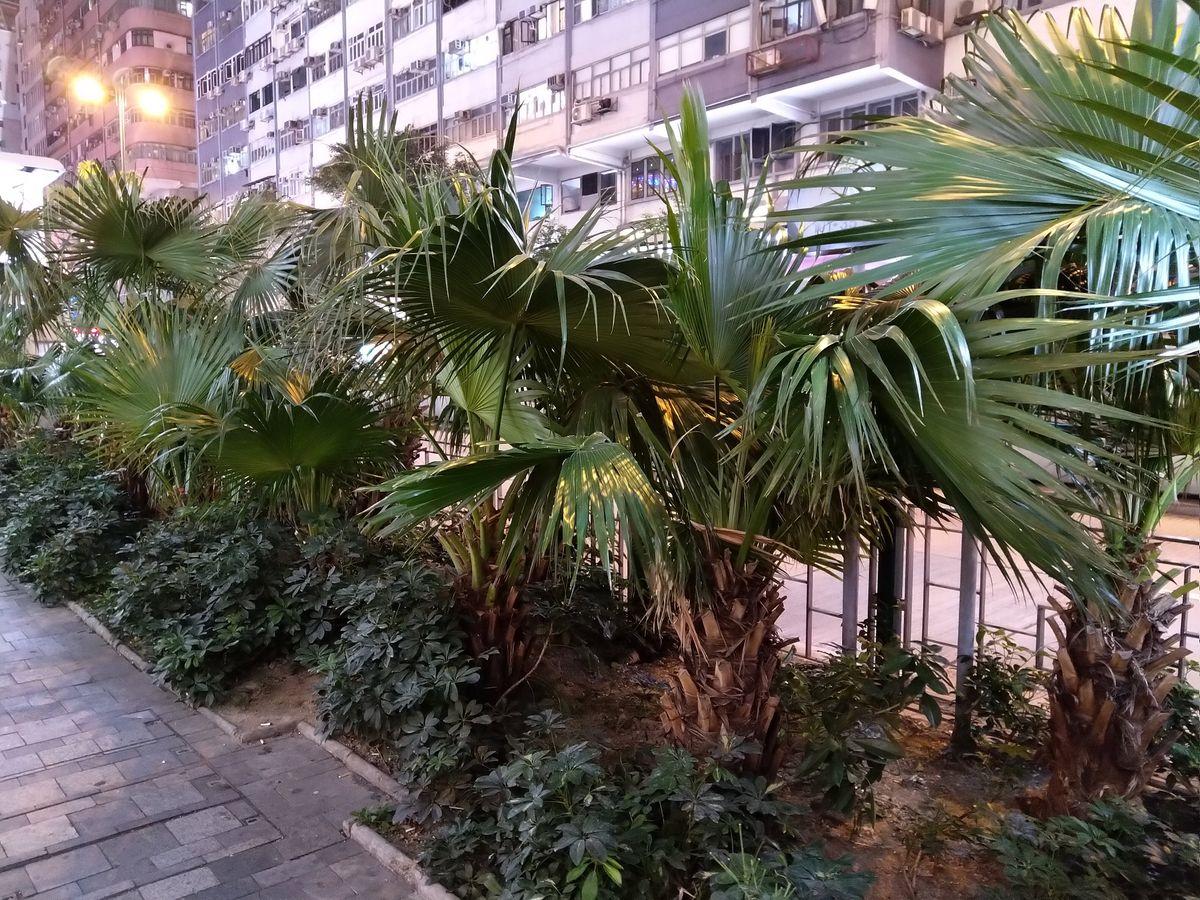 Élmények Hongkongban növények az utcán